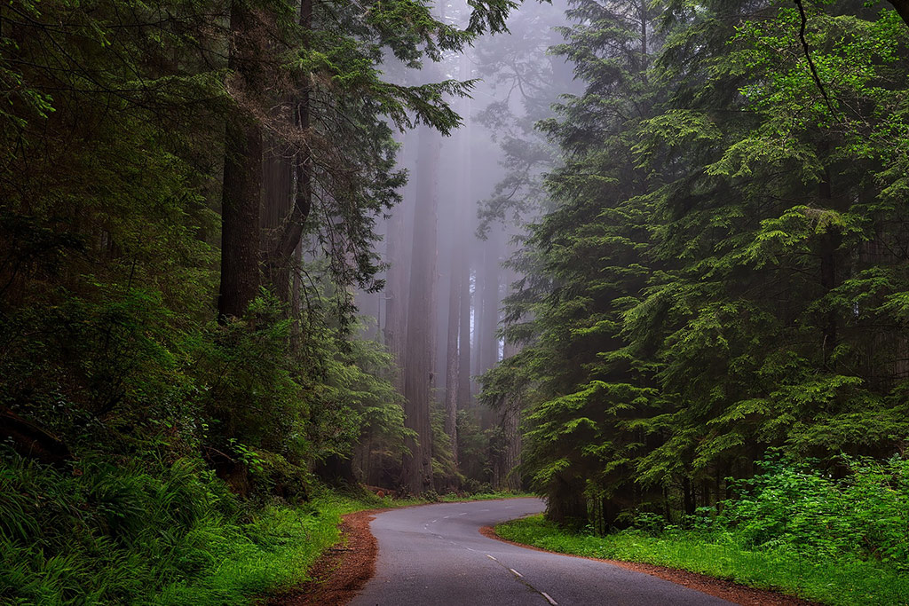California Getaways - Redwoods